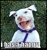 Seattle RC Racers/Hangar 30-cute-puppy-pictures-i-has-happy.jpg