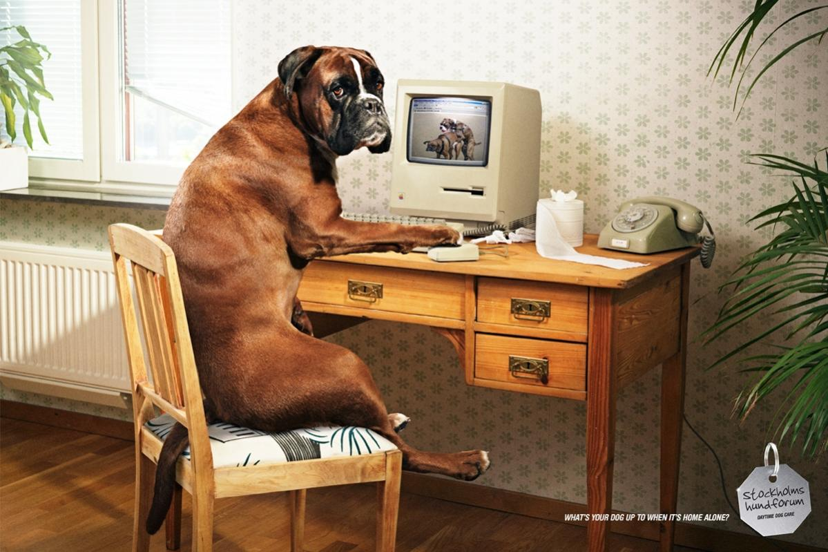 Sorry Dog On Computer Desk Daycare Humping Jpg